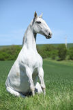 Amazing sitting horse in nature Royalty Free Stock Images