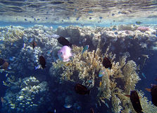 Amazing snorkeling Royalty Free Stock Images