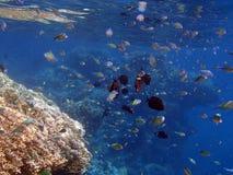 Amazing snorkeling Royalty Free Stock Photos