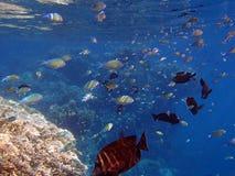 Amazing snorkeling Stock Photography