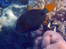 Amazing snorkeling Royalty Free Stock Photography