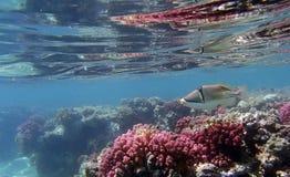 Amazing snorkeling Royalty Free Stock Photo