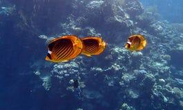 Amazing snorkeling Royalty Free Stock Image