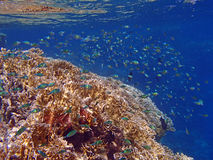 Amazing snorkeling Stock Images