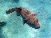 Amazing snorkeling Stock Photo