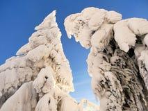 Snowy trees of a winter mountain stock photos