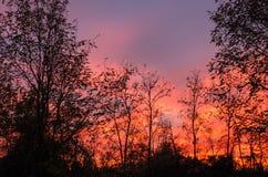 Amazing orange sunset. Stock Photography