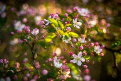 Amazing spring blooming stock photos