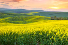 Amazing spring fresh landscape of colorful fields Stock Images