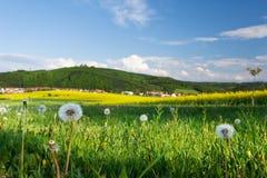 Amazing spring landscape Stock Image
