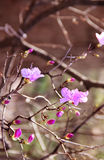 Amazing spring trees in bloom Royalty Free Stock Photography