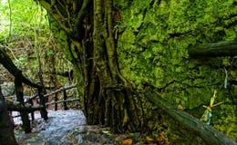 Amazing stone staircase, fence, tree. Amazing scene at Mekong Delta rocky mountain, old stone staircase with rock fence, tree with large tree trunk, abstrack Royalty Free Stock Image