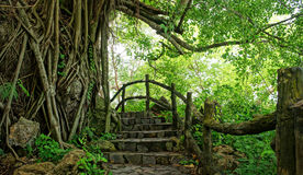 Amazing stone staircase, fence, tree. Amazing scene at Mekong Delta rocky mountain, old stone staircase with rock fence, tree with large tree trunk, abstrack Stock Photos