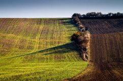 Amazing stripe patterns on waved fields of South Moravia Royalty Free Stock Photography
