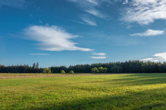 Amazing summer morning in nature Royalty Free Stock Photography