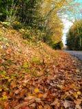 Amazing Sunny Autumn Day royalty free stock photos