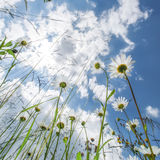 Amazing sunny day at summer meadow with wildflowers Stock Photos