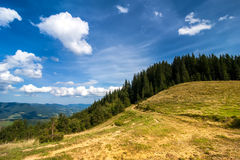 Amazing sunny landscape with pine tree highland forest Stock Photography