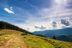 Amazing sunny landscape with pine tree highland forest Royalty Free Stock Images