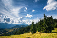 Amazing sunny landscape with pine tree highland forest Stock Photo