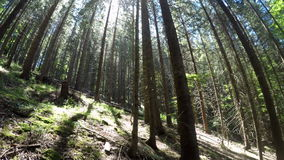 Amazing sunny morning at deep highland forest of Carpathian mountains. Wide angle panning view stock footage