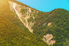 Amazing sunny mountain landscape. With green trees stock photography