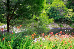 Amazing sunny scenery with water and greenery close to Charlie's Royalty Free Stock Photos
