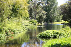 Amazing sunny scenery with water and greenery. Stock Image