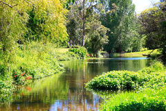Amazing sunny scenery with water and greenery. Stock Photography
