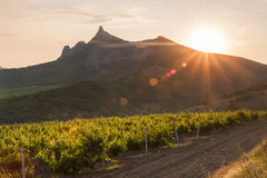 Amazing sunrise over the vineyards Stock Photo