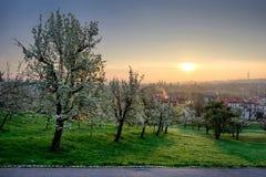 Amazing sunrise during spring morning, Prague, Czech republic. Stock Photography