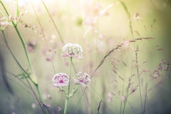Amazing sunrise at summer meadow with wildflowers royalty free stock photo