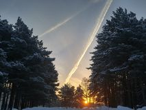 Amazing Sunrise in Winter forest Sun Snow Sky. Cold Siberia Trail Pine royalty free stock photography