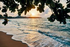 Amazing sunset at the beach. Tropical mangrove trees sunset background royalty free stock photo