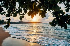 Amazing sunset at the beach. Tropical mangrove trees sunset background stock photography