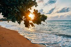 Amazing sunset at the beach. Tropical mangrove trees sunset background royalty free stock image