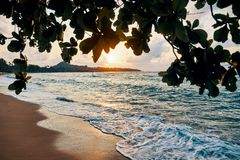Amazing sunset at the beach. Tropical mangrove trees sunset background stock image
