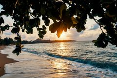 Amazing sunset at the beach. Tropical mangrove trees sunset background stock photos