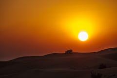 Amazing sunset in the desert Stock Photos