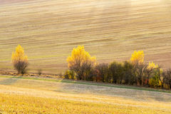 Amazing sunset in farmland with autumnal colorful trees Stock Photo