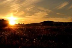 Amazing sunset. Fields and amazing golden sunset Royalty Free Stock Photo