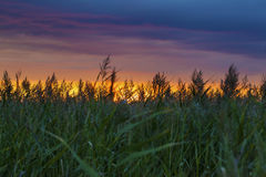 Amazing sunset with grass silhouettes Stock Photo