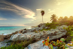 Amazing sunset at the jungle royalty free stock photography