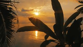 Amazing sunset over the tropical beach. Steadicam stabilized shot stock footage
