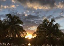 Sunset between palm trees stock photos
