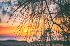 Amazing sunset on the sea through leaves Royalty Free Stock Images