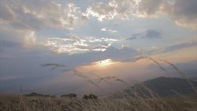 Amazing sunset shot very low from the yellow grass in slow motion shoot from paraglaider stock video