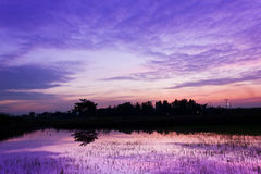 Amazing sunset. On violet color Stock Image
