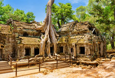 Amazing Ta Prohm temple overgrown with trees in Angkor, Cambodia Stock Image
