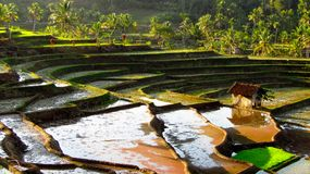 Amazing Terrace Rice Field stock photography